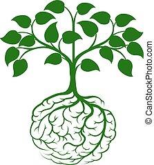 mózg, korzeń, drzewo