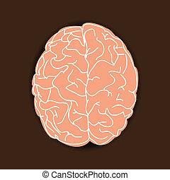 mózg, ludzki, tło, brązowy