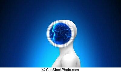 mózg, medyczny, -, rentgenowski, skandować