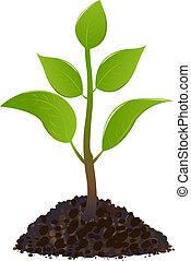 młody, zielona roślina