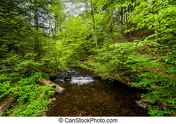 mały, dolina górska, park, zatoczka, stan, kaskada, pennsylvania., ricketts