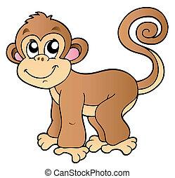 mały, sprytny, małpa