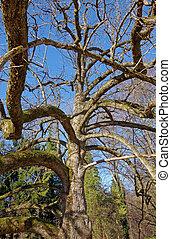 magnoliowe drzewo