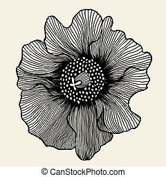 mak, kwiat