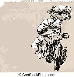 mak, kwiaty, grunge, tło