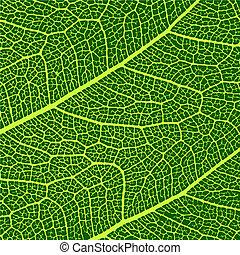makro, liście, wektor, struktura