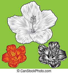 malwa, kwiat, kwiat, zmiany