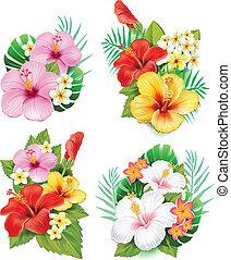malwa, kwiaty, rozmieszczenie