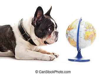 mapa, na, pies, tło, świat, biały