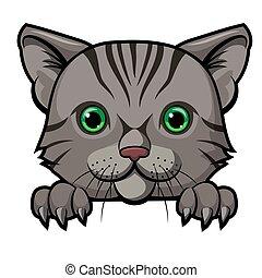 maskotka, rysunek, projektować, sprytny, kot, głowa