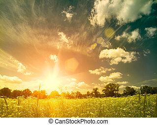 meadow., lato, naturalne piękno, na, tła, jasny, zachód słońca, dziki, chamomile, kwiaty