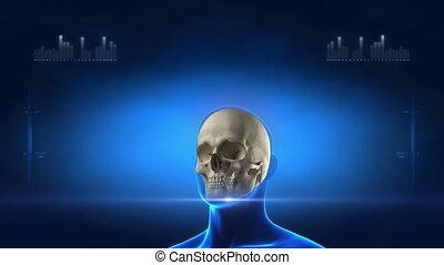 medyczny rentgenowski, skandować, szkielet