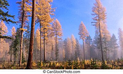 mgła, las