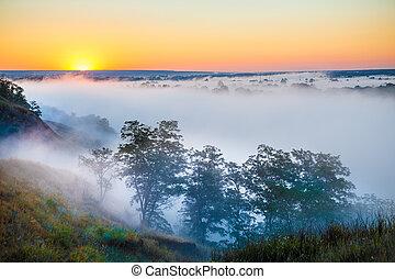 mglisty, na, dolina, las, świt