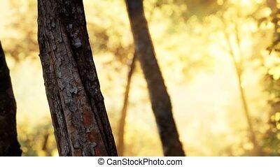 mglisty, wcześnie, las, rano