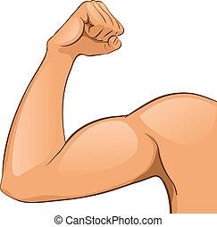mięśnie, ręka, człowiek