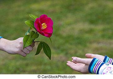 miłość, udzielanie, symbol, siła robocza, kwiaty, przyjaźń, dzieci