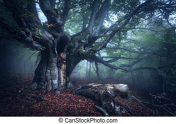 mistyczny, stare drzewo, jesień, mgła, las, morning.
