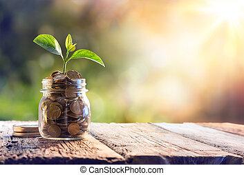monety, roślina, oszczędności, rozwój