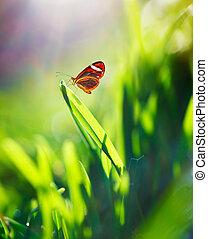 motyl, pole, piękny