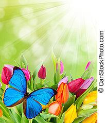 motyl, skoczcie kwiecie