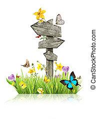 motyle, wiosna, pojęcie, łąka, drogowskaz