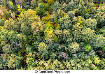 na dół, antena, górny, forest., jesień, prospekt