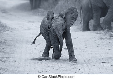 nakarmić, gra, rodzina, młody, znowu, artystyczny, słoń, droga, zamiana