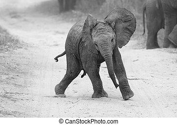 nakarmić, gra, rodzina, młody, znowu, artystyczny, słoń, pobliski, droga, zamiana