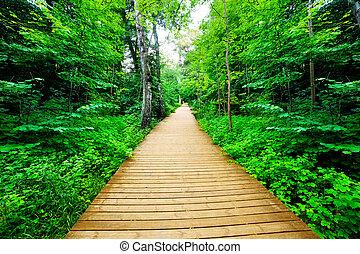natura, drewniany, bush., soczysty, las, zielony, droga, spokojny