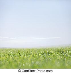 natura, jasne niebo, zielone tło, trawa