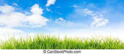 natura, wiosna, tło, wstecz, czas, niebo, lato, błękitny, trawa