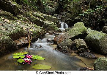 nenufar, wodospad, las, mały