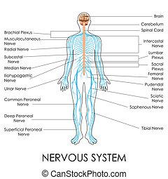 nerwowy system