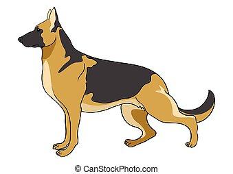 niemiecki pastuch, pies