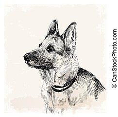niemiecki pastuch, pies, portret, atrament