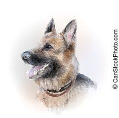 niemiecki pastuch, pies, portret