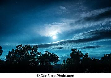 noc, pełny, las, księżyc