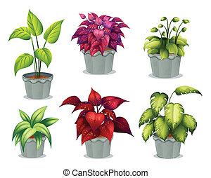 non-flowering, rośliny, sześć