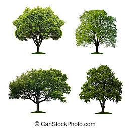 odizolowany, drzewa