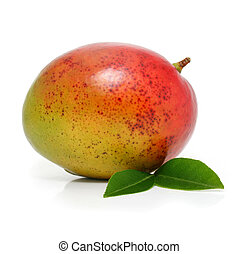 odizolowany, mangowiec, owoc, zielony, liście, świeży