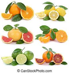 odizolowany, zbiór, grejpfrut, pomarańcze, cytryny, owoce, biały