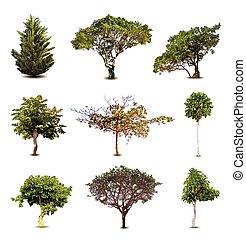 odizolowany, zbiór, tło., wektor, drzewa, biały
