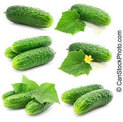odizolowany, zielony, liście, owoce, roślina, ogórek