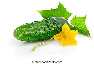 ogórek, liście, świeży, zielony, owoce