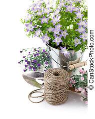 ogród, liście, wyposażenie, zielony, fioletowe kwiecie