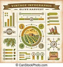 oliwka, rocznik wina, infographic, żniwa