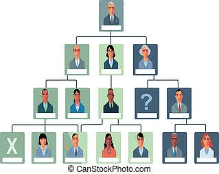 organizacja, wykres, budowa