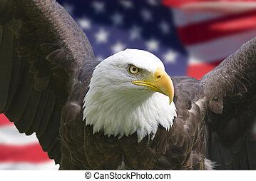 orzeł, amerykańska bandera