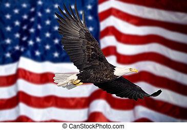 orzeł, bandera, przelotny, łysy, przód